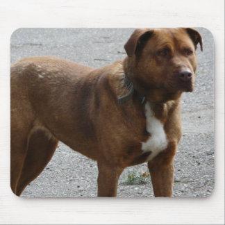 Perro rescatado raza mezclada de Pitbull Terrier Tapete De Ratón