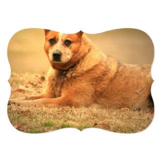 """Perro rojo australiano del ganado invitación 5"""" x 7"""""""
