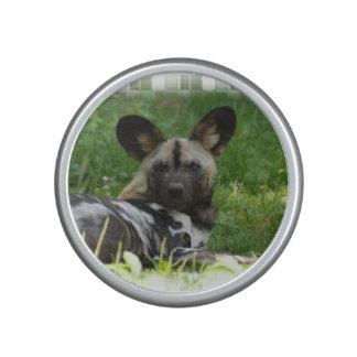 Perro salvaje africano altavoz bluetooth