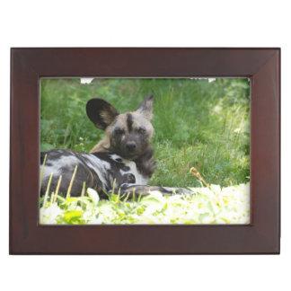 Perro salvaje africano caja de recuerdos