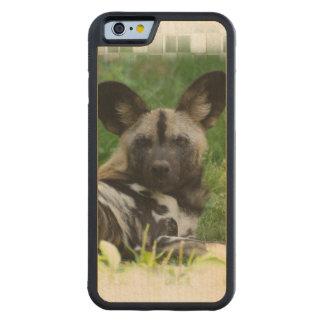 Perro salvaje africano funda de iPhone 6 bumper arce