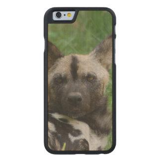 Perro salvaje africano funda de iPhone 6 carved® slim de arce