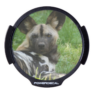 Perro salvaje africano pegatina LED para ventana