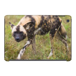 Perro salvaje africano Lycaon Pictus juego de Fundas De iPad Mini Retina