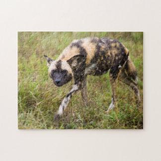 Perro salvaje africano Lycaon Pictus juego de Puzzles