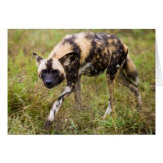 Perro salvaje africano Lycaon Pictus juego de Felicitación
