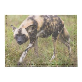 Perro salvaje africano Lycaon Pictus juego de Tarjeteros Tyvek®