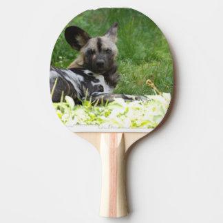 Perro salvaje africano pala de ping pong