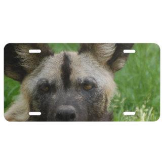 Perro salvaje africano placa de matrícula