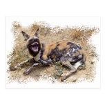 Perro salvaje africano que muestra sus dientes postal