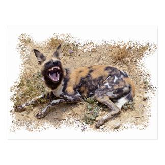 Perro salvaje africano que muestra sus dientes tarjetas postales