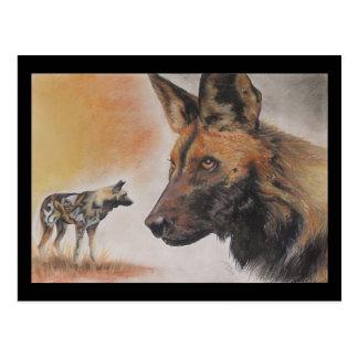 Perro salvaje africano tarjeta postal