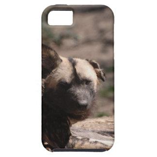 Perro salvaje con el oído flojo iPhone 5 Case-Mate cobertura