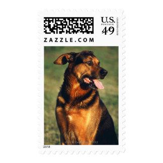 perro sello