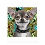 Perro sonriente de la chihuahua tarjeta postal