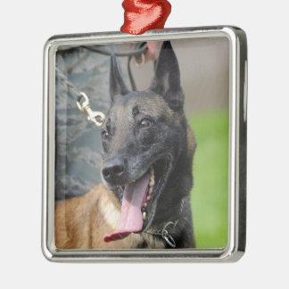 Perro sonriente de Malinois del belga Ornato