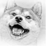 Perro sonriente de Shiba Inu Esculturas Fotográficas