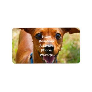 Perro sonriente del cuello azul del Pinscher Etiquetas De Dirección