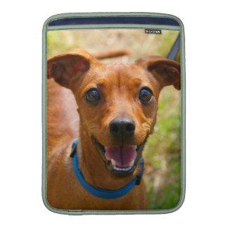 Perro sonriente del cuello azul del Pinscher Fundas MacBook