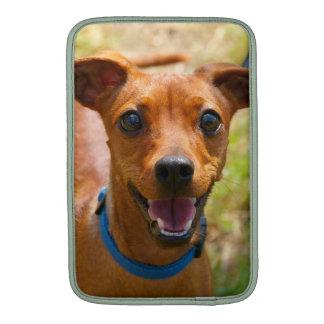 Perro sonriente del cuello azul del Pinscher Funda Para Macbook Air