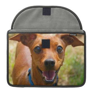 Perro sonriente del cuello azul del Pinscher Fundas Para Macbooks