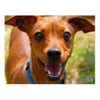 Perro sonriente del cuello azul del Pinscher Postal