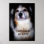 Perro sucio - Aussie con la piel fangosa y la cara Posters