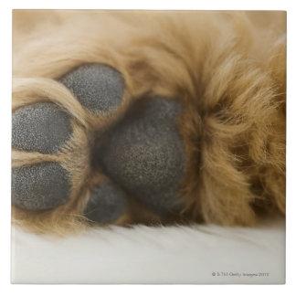 Perro, vista de la pierna azulejo cuadrado grande
