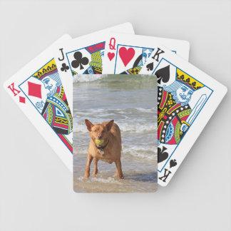 Perro y bola en la playa baraja