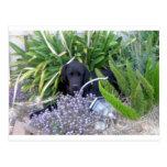 Perro y flores 156 de Terranova Postales
