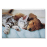 perro y gato póster