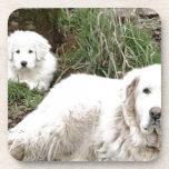 Perro y perrito de los grandes Pirineos Posavasos De Bebidas