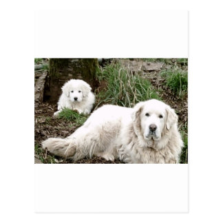Perro y perrito de los grandes Pirineos Postales