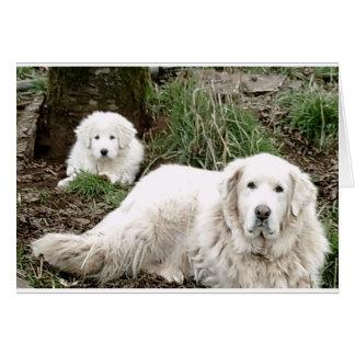 Perro y perrito de los grandes Pirineos Tarjeta De Felicitación