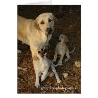 Perro y perritos de Anatolia de pastor Tarjeta