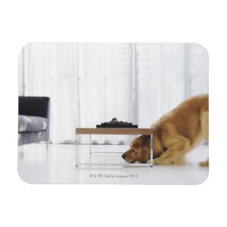 Perro y tabla imanes de vinilo