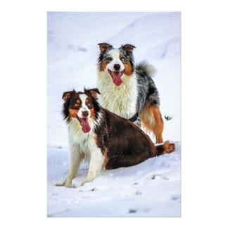 Perros australianos de los pares del pastor papeleria de diseño