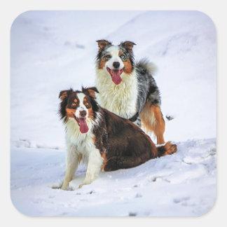 Perros australianos de los pares del pastor pegatina cuadrada