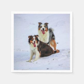 Perros australianos de los pares del pastor servilletas de papel