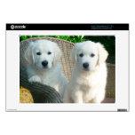 Perros blancos del golden retriever que se sientan acer chromebook calcomanía