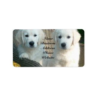 Perros blancos del golden retriever que se sientan etiqueta de dirección