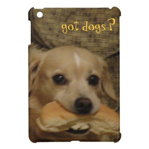 ¿Perros conseguidos?