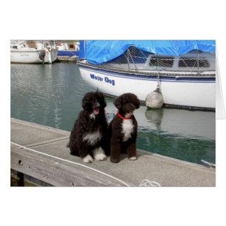 Perros de agua en el muelle tarjetón