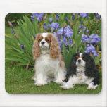 Perros de aguas de rey Charles arrogantes en jardí Tapete De Raton