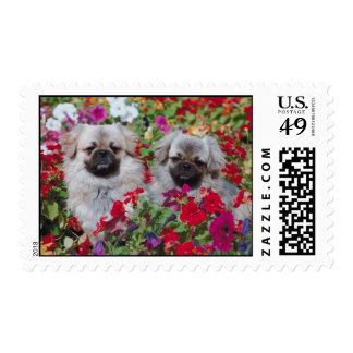 Perros de aguas en flores franqueo