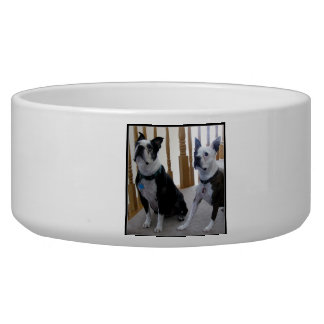 Perros de Boston Terrier Comedero Para Mascota