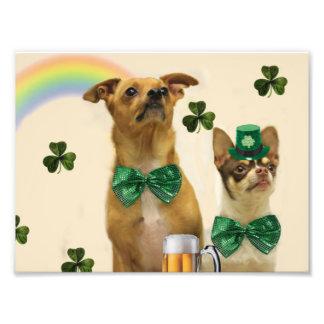 Perros de la chihuahua del día de St Patrick Fotografía