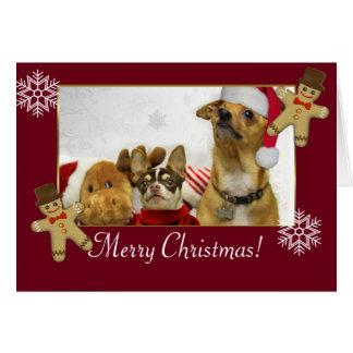 Perros de la chihuahua del navidad tarjeta de felicitación