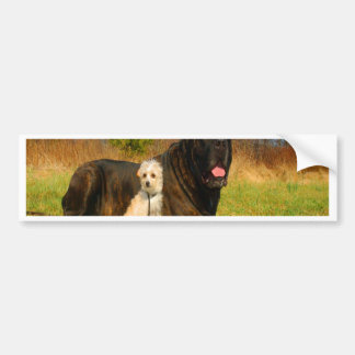 Perros de la mezcla de la chihuahua del corse del pegatina de parachoque
