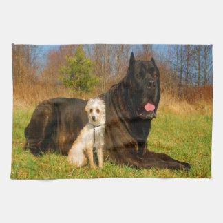 Perros de la mezcla de la chihuahua del corse del toalla